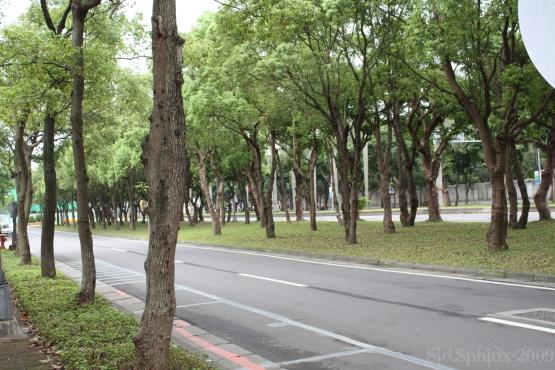 樹林分隔島